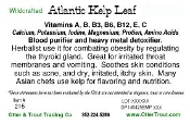 Atlantic Kelp
